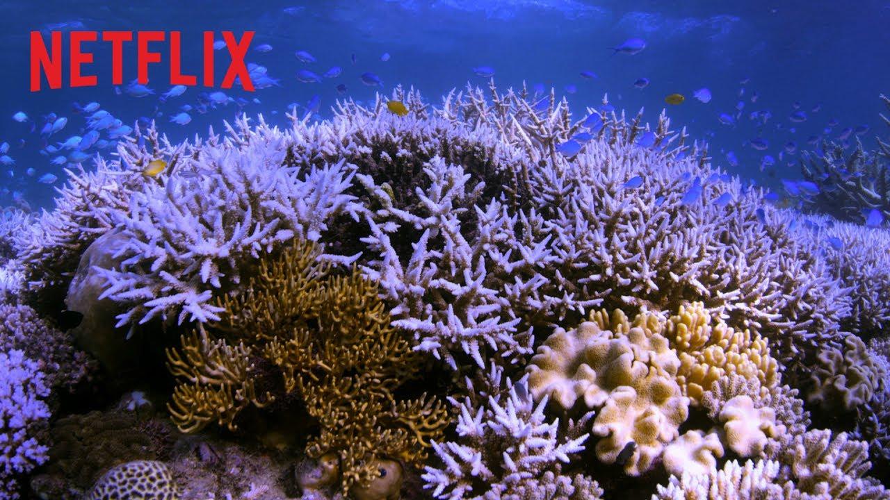 Chasing Coral – Climat en péril : la preuve par l'image | Bande-annonce officielle [HD] | Netflix