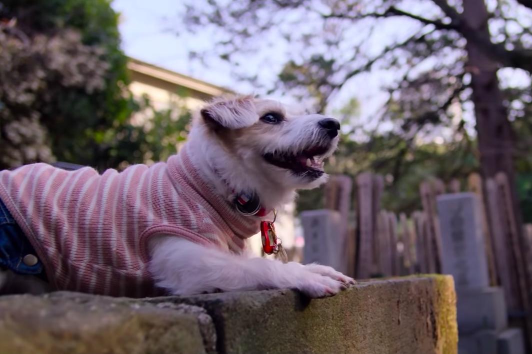 Dogs, une nouvelle docu-série qui a du chien !