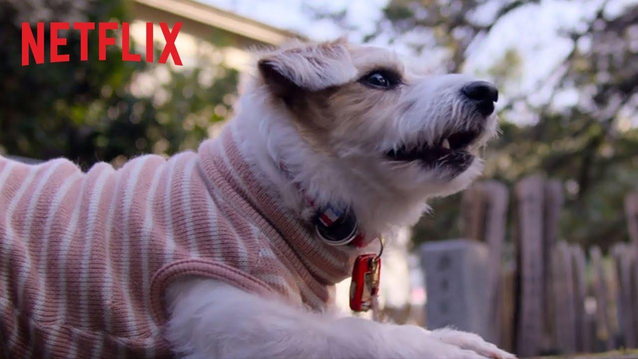 Nos amis les chiens | Bande-annonce officielle [HD] | Netflix