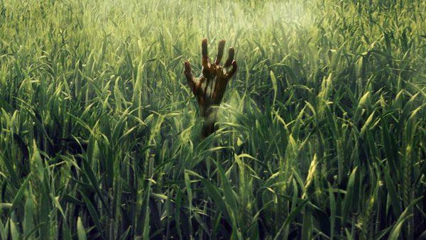 dans-le-shautes-herbes