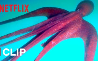 why do octopuses eat their tentacles absurd planet netflix futures youtube thumbnail 400x250 - Vidéos