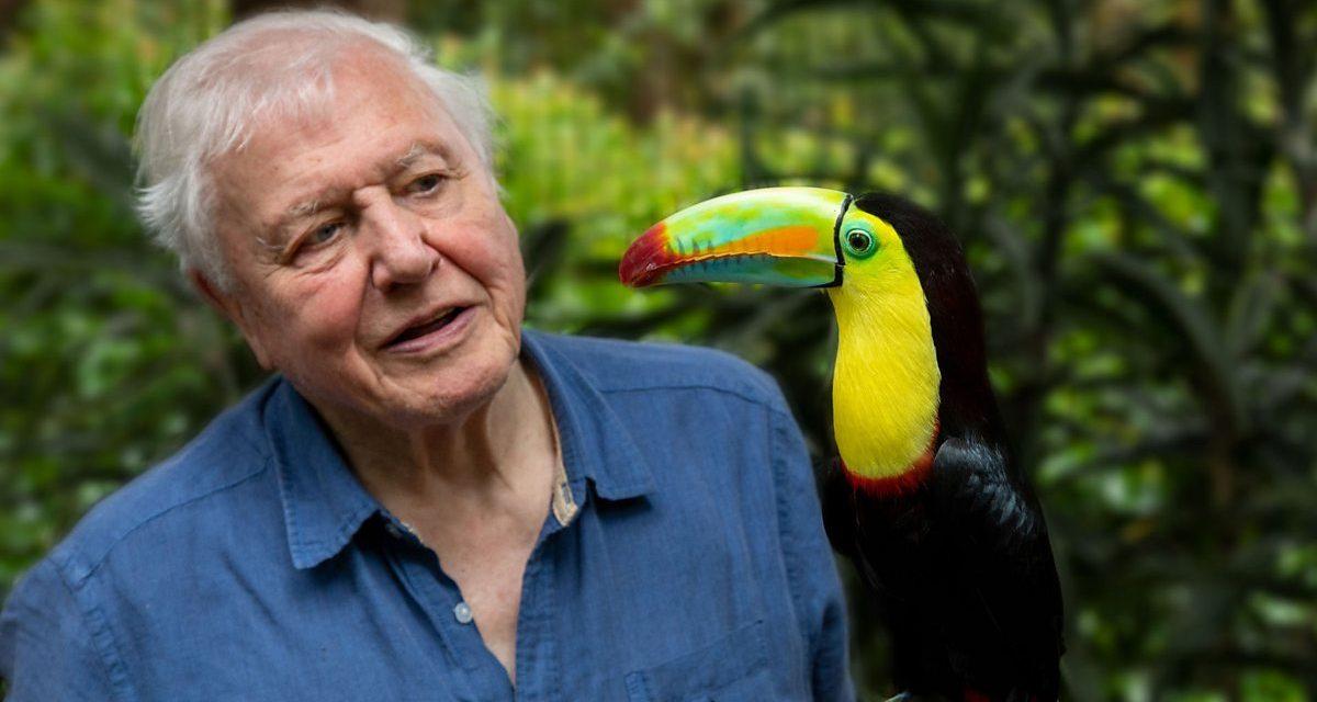 La vie en couleurs avec David Attenborough : la Terre célébrée dans une nouvelle série documentaire Netflix
