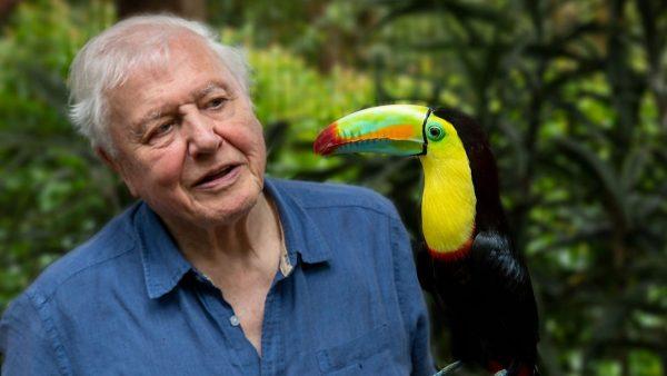 life in colour david attenborough 600x338 - La vie en couleurs avec David Attenborough : la Terre célébrée dans une nouvelle série documentaire Netflix