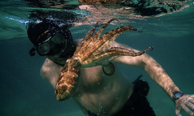 La sagesse de la Pieuvre, plongez dans la magie subaquatique du documentaire oscarisé  ! (+Avis)